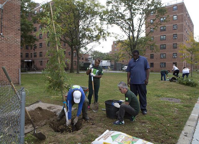 nycha tree-planting
