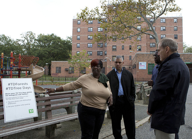 NYCHA trees building people