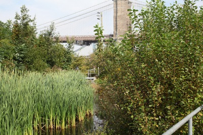 Brooklyn-Bridge-Park-Climate