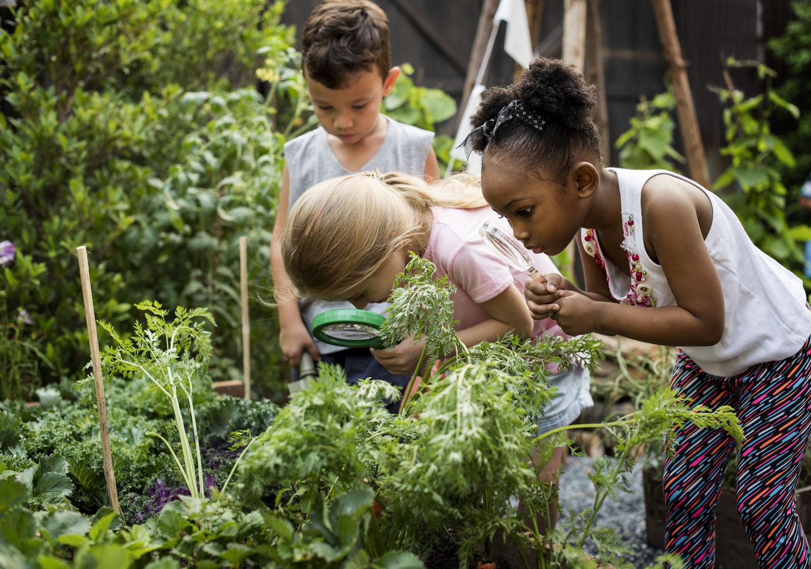 school garden 2 002