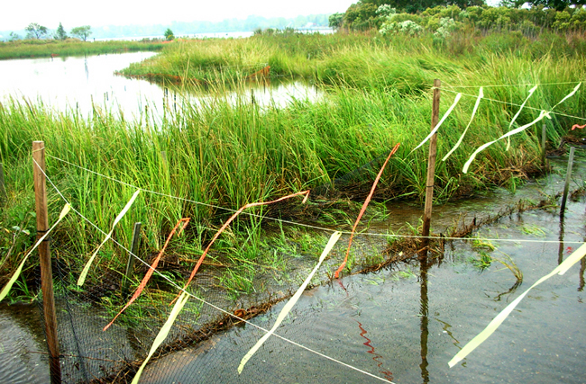 Carteret wetlands restoration site on Arthur Kill